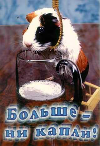 Пиво! Фотографии животных с пивом: moepivo.narod.ru/pubs_picture/beer-and-animals.html