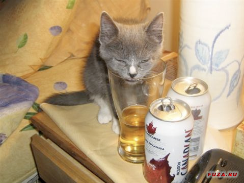Фото кота и пива